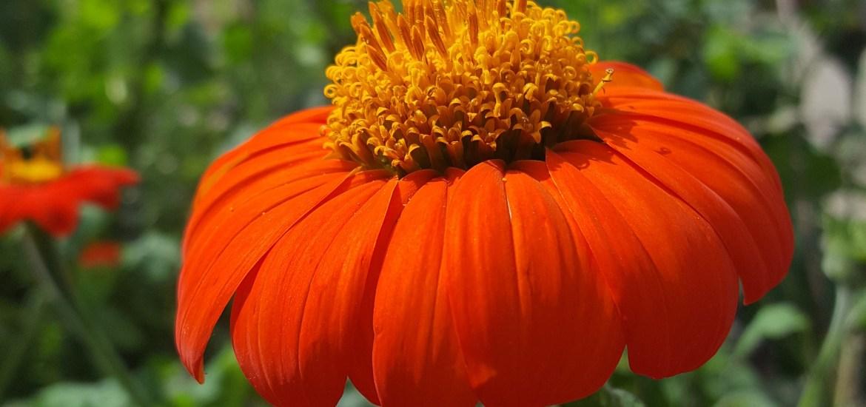 Botanical garden munchen