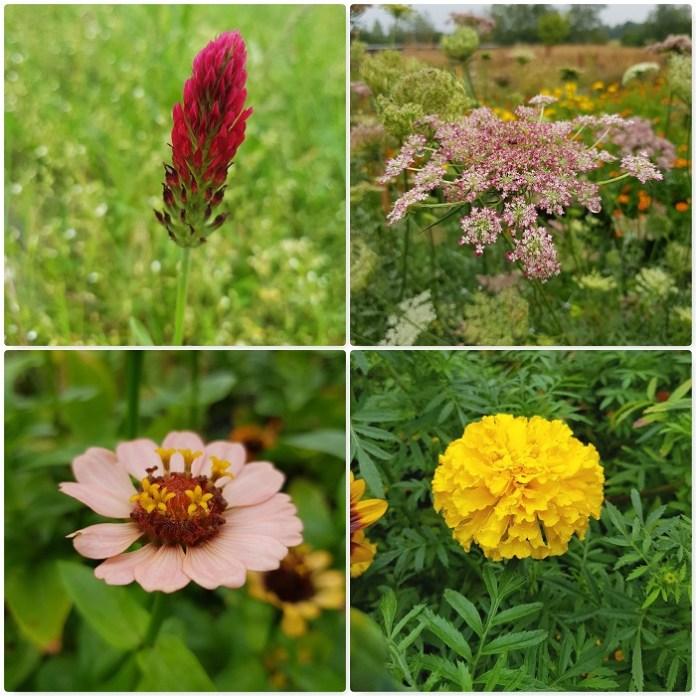 eenjarge bloemen