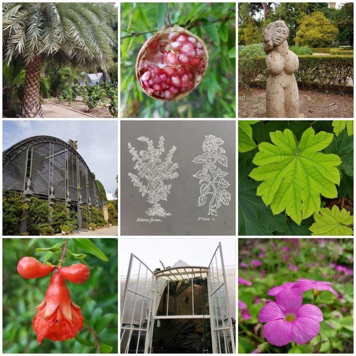 Valencia botanische tuin