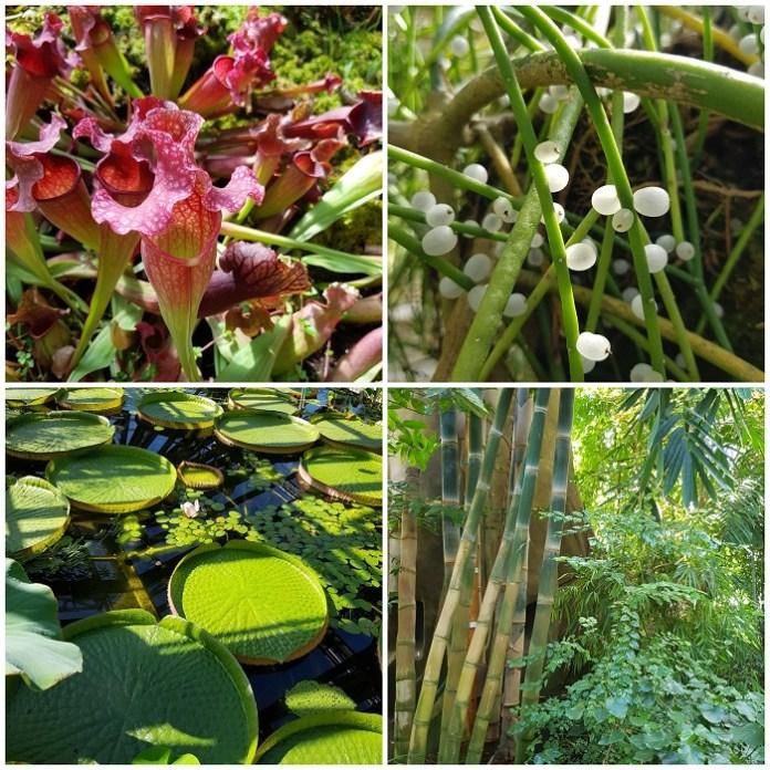 Tropische kassen botanische tuin berlijn