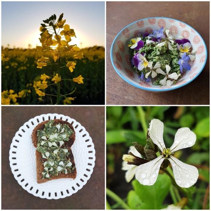 eetbare bloemen zoals rucola