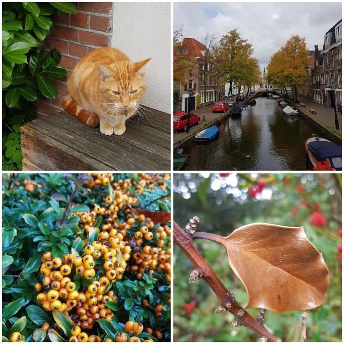 herfstgroen Alkmaar