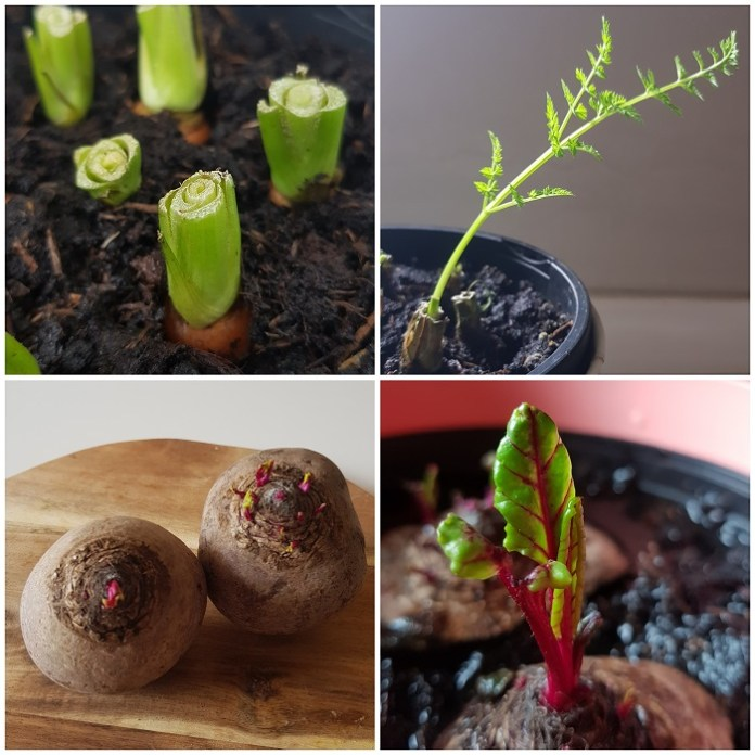 groente een tweede leven