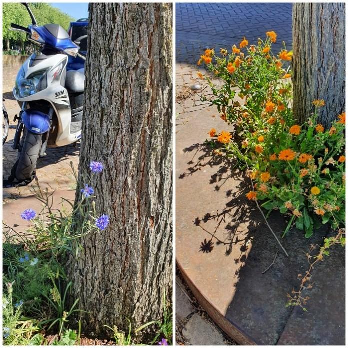 tuinieren in de stad in boomspiegels