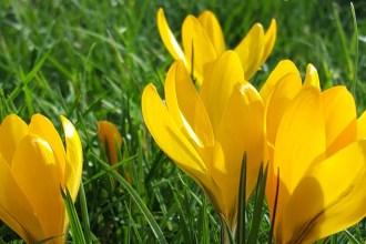 tuinieren in maart