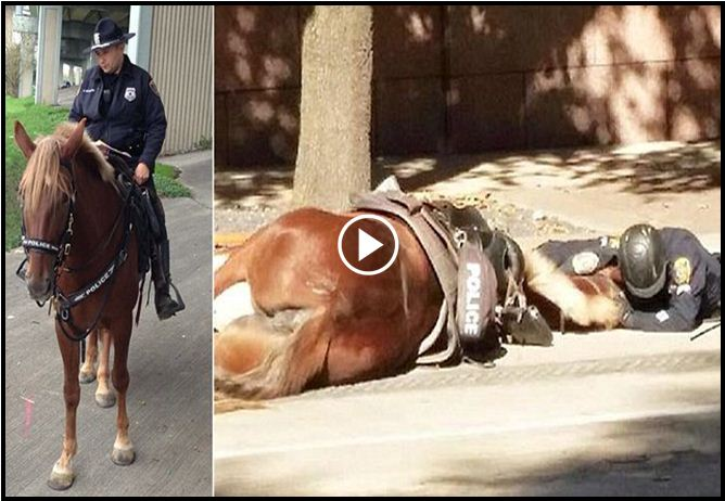 Bystander Sees An Officer Lying Prone With His Horse, The Story Behind The Photo Is Tragic [VIDEO]