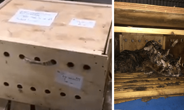 Strange Box Sat At Airport For 7 Days Until Someone Finally Helped The Animals Trapped Inside (UPDATED)