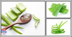 Mind-Blowing Reasons Why Aloe Vera Is a Miraculous Medicinal Plant! You'll Never Buy Expensive Products Again
