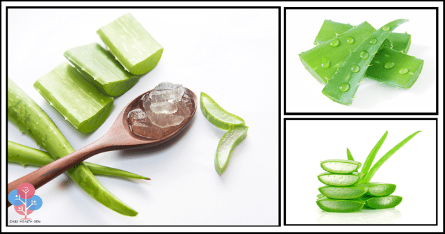 mind-blowing-reasons-why-aloe-vera-is-a-miraculous-medicinal-plant-youll-never-buy-expensive-products-again