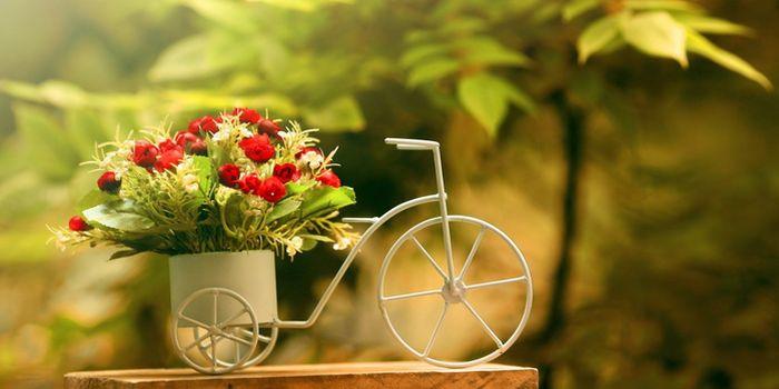 Можно ли пересаживать цветы на убывающую луну