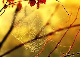 αράχνη άντρας που χρονολογείται είναι ο Τζιμ στέρις που ακόμα βγαίνει με τον Μίκυ ο Μπρέν