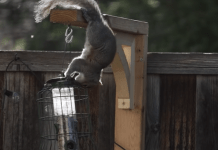 Ninja squirrels