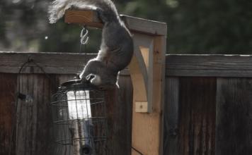Ninja squirrels