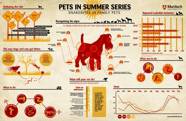 10-signs-your-dog-or-cat-has-been-biten-by-a-snake-infographic