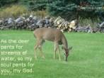 Deer with watermark