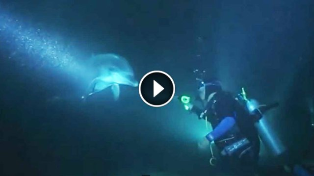Image result for Injured Dolphin Approached Divers For Help. Nothing Could Prepare Them For What They Saw