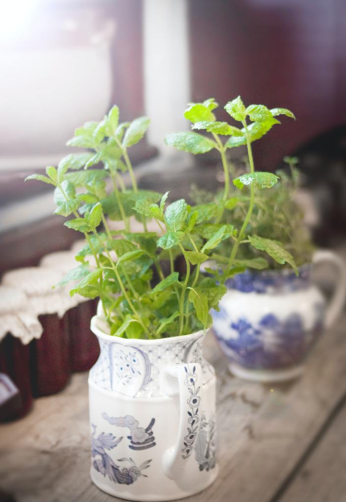 Mint: magical benefits and uses of mint 3 - Daily Medicos