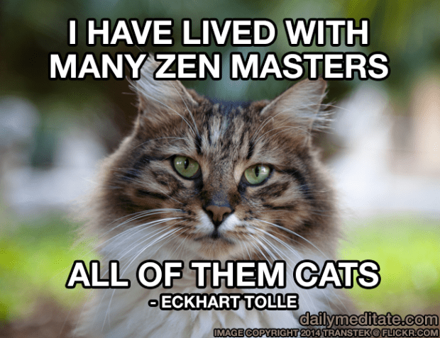 """""""I have lived with many Zen masters, all of them cats."""" - Eckhart Tolle"""