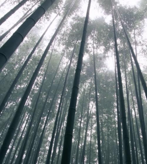 Japanese Shakuhachi Meditation Music