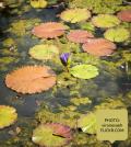 Meditating Daily - No Matter What