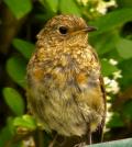Birds Singing Morning Meditation