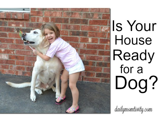 Is Your House Ready for a Dog