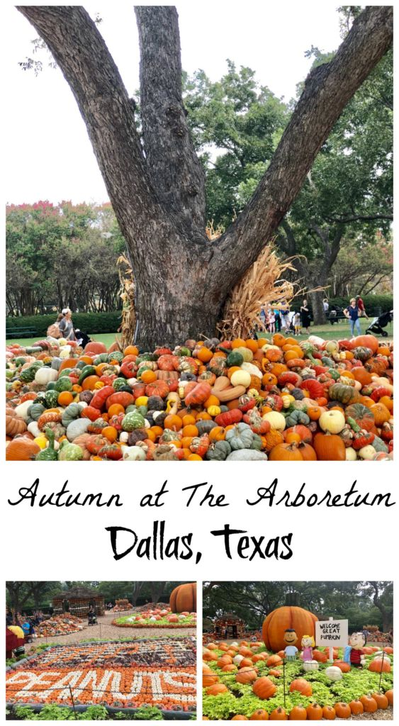 The annual fall festival with Autumn at the Arboretum at the Dallas Arboretum!