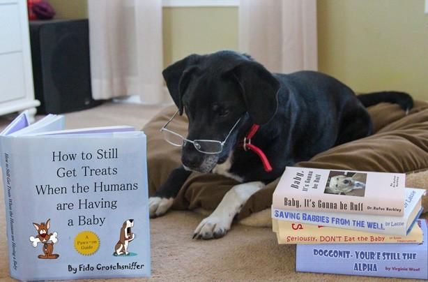 pregnancy-announcement-dog