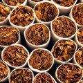 تمباکو