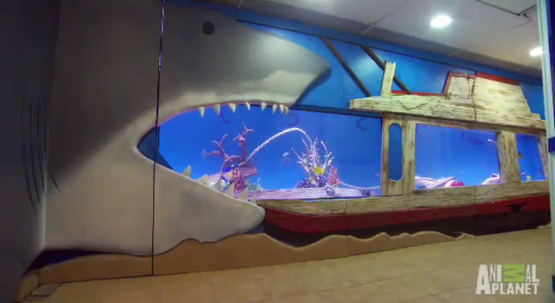 Tracy Morgan Shows Us His Shark Tank In His Basement