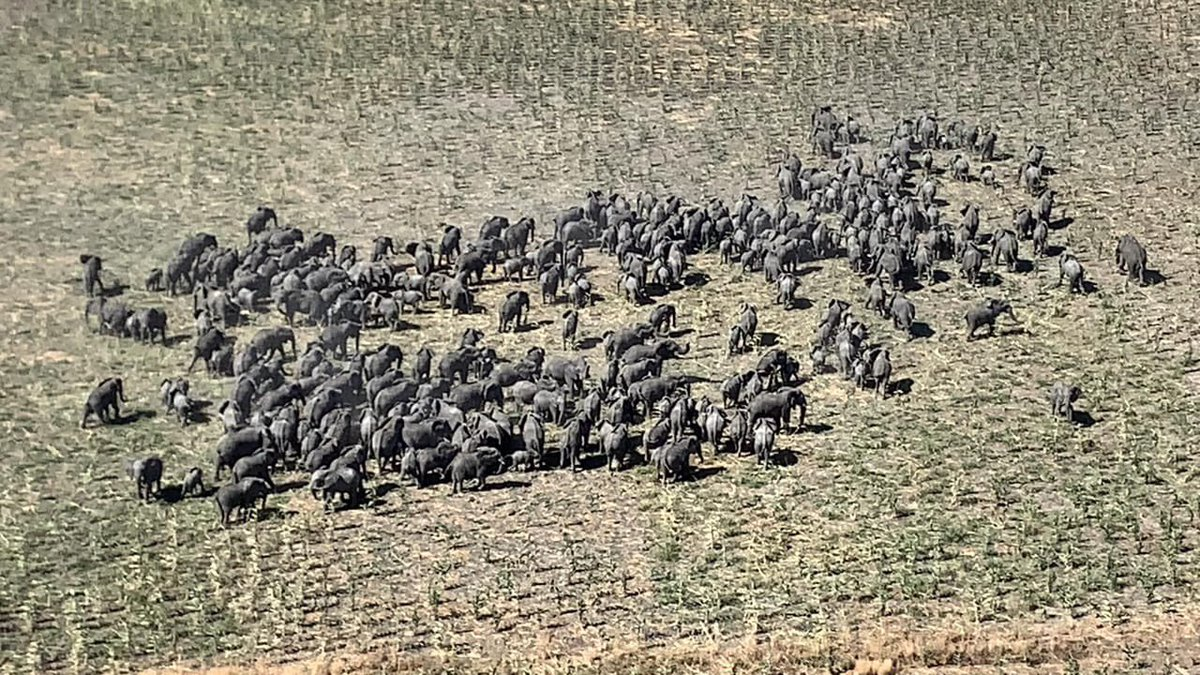 250 Elephants Sighted In Boko Haram's Battlefield In Borno (Photo) 2