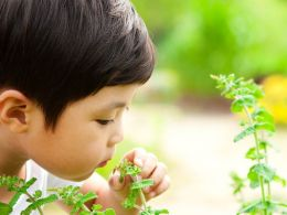 Colorado Children Who Lose Sense Of Smell Set To Receive Olfactory Training