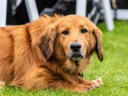 Use This Guide To Help You Choose The Best Flea And Tick Treatment For Your Pet