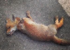 puppy fox poisoned, why poison a fox