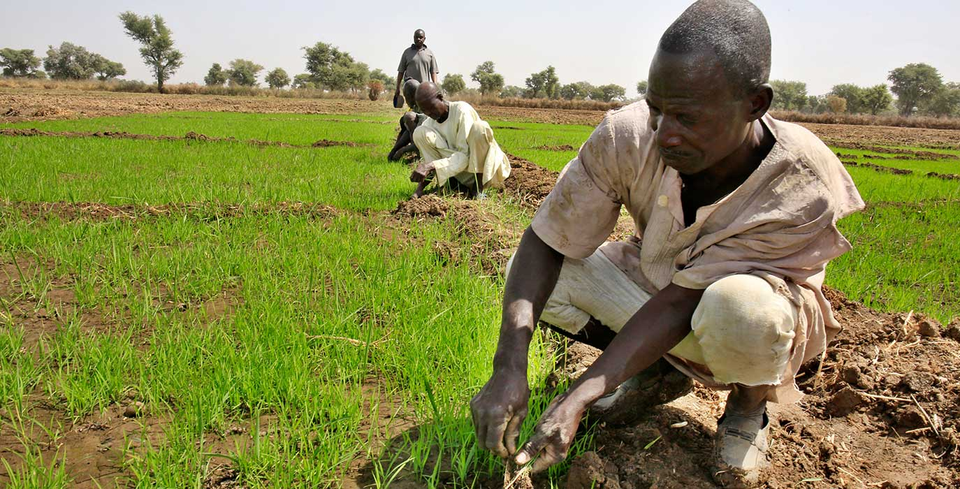 Alhaji Muhammad Augie Chairman Rice Farmers