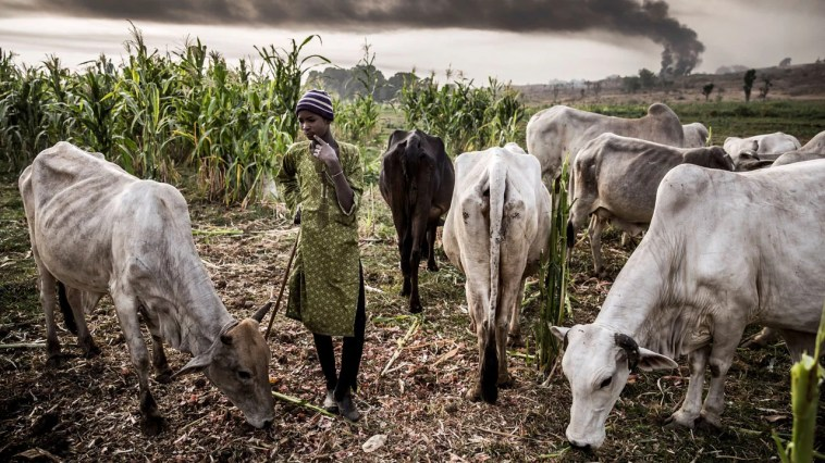Again, herdsmen unleash terror on Irele-Ekiti