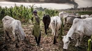 Community leaders responded to Oluwa with a call for Fulani to move to his domain