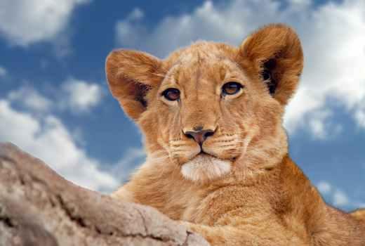 Lion King Remake Be Prepared