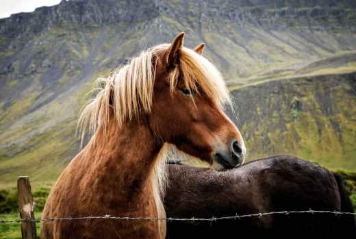 Dark Tower Horses