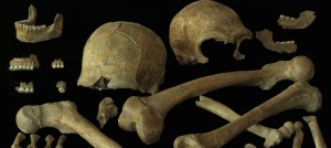 Collections des ossements humains découverts à Spy en 1886. © P. Semal/ IRSNB