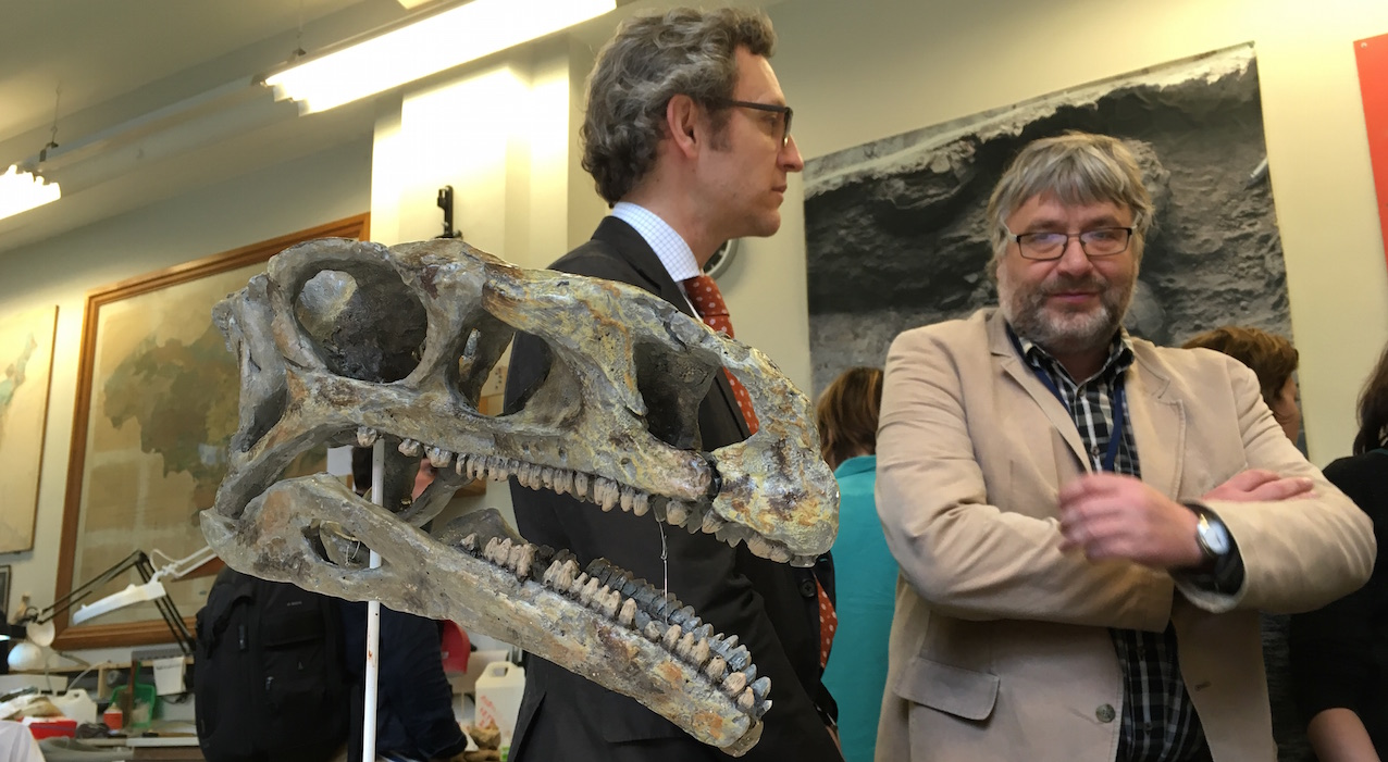 Le paléontologue belge Pascal Godefroit (IRSNB) jette un œil au moulage d'un crâne de Platéosaure venu d'Allemagne.