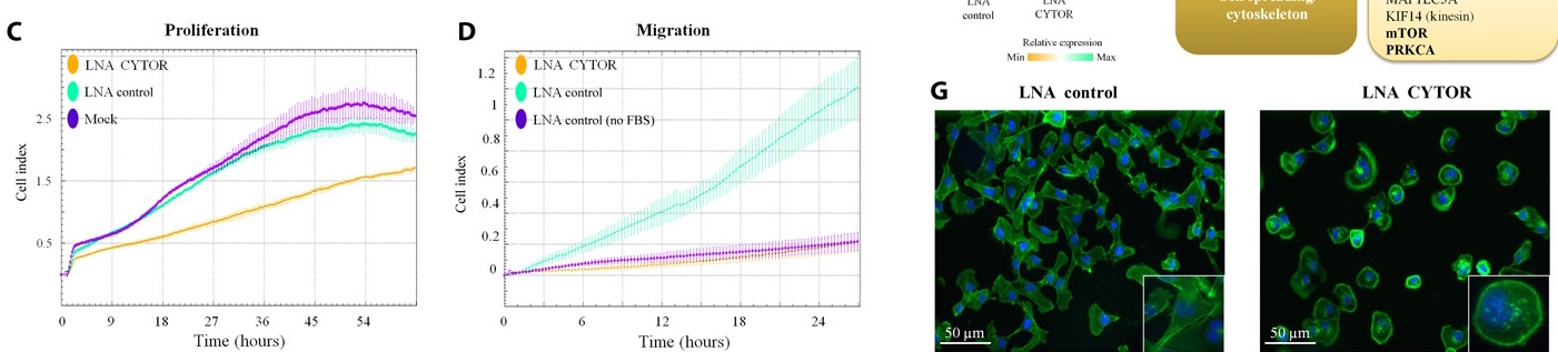 """Extrait d'un graphique accompagnant l'article """"Portraying breast cancers with long noncoding RNAs"""" du Pr Fuks (ULB) dans le journal """"Science Advances""""."""