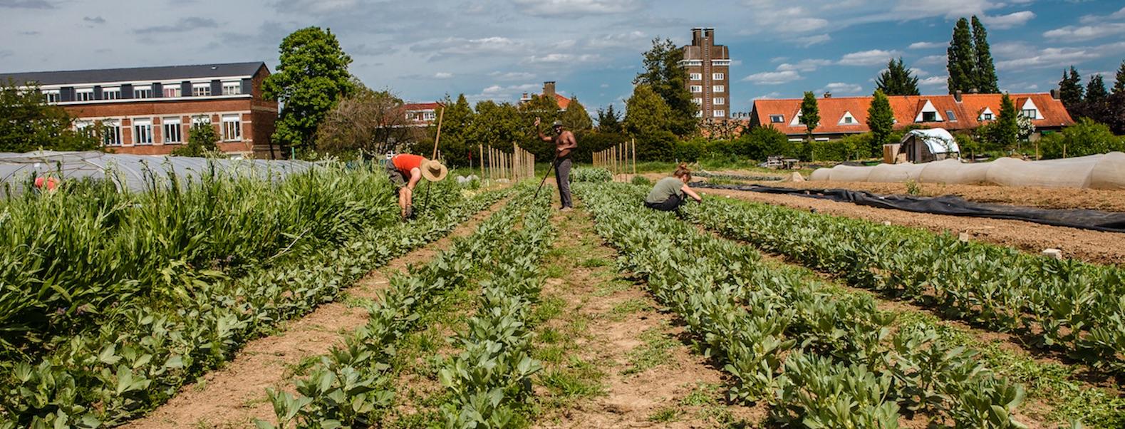 Watermael-Boitsfort (Bruxelles), potagers communautaires. © VP