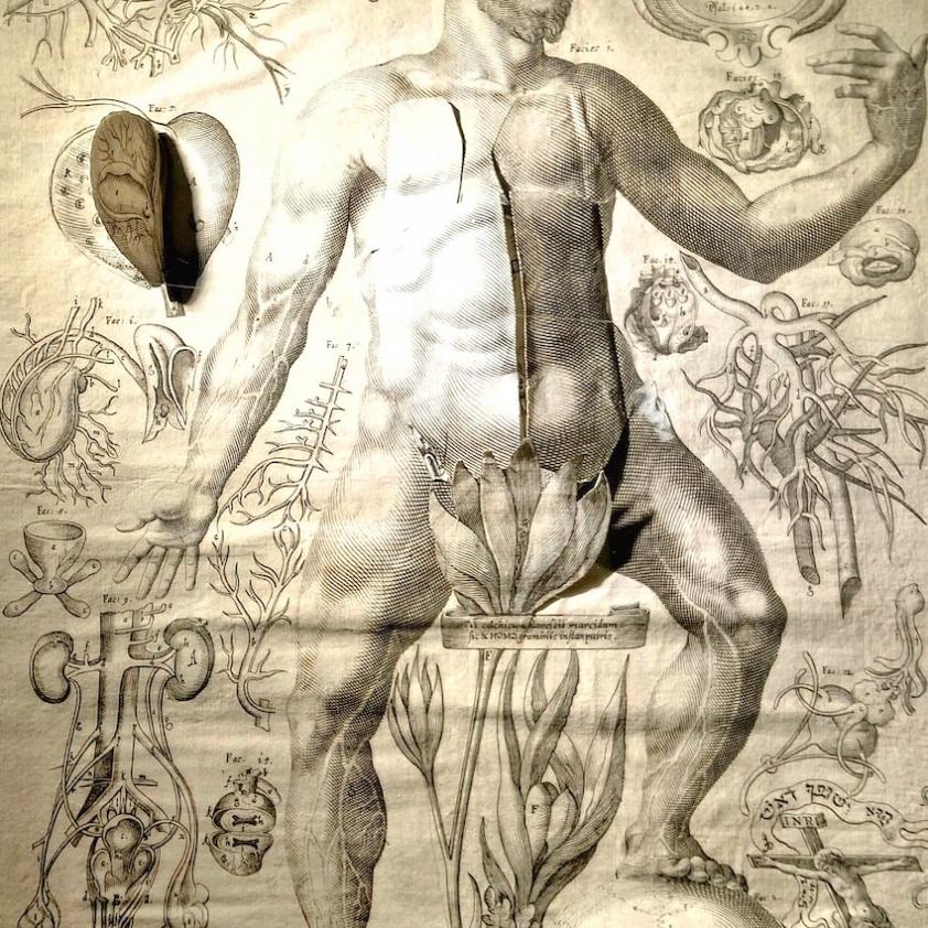 « Captotrum microscopicum secundo » issu du Cum deo de J. L. Remmelin (1619) © Céline Husson