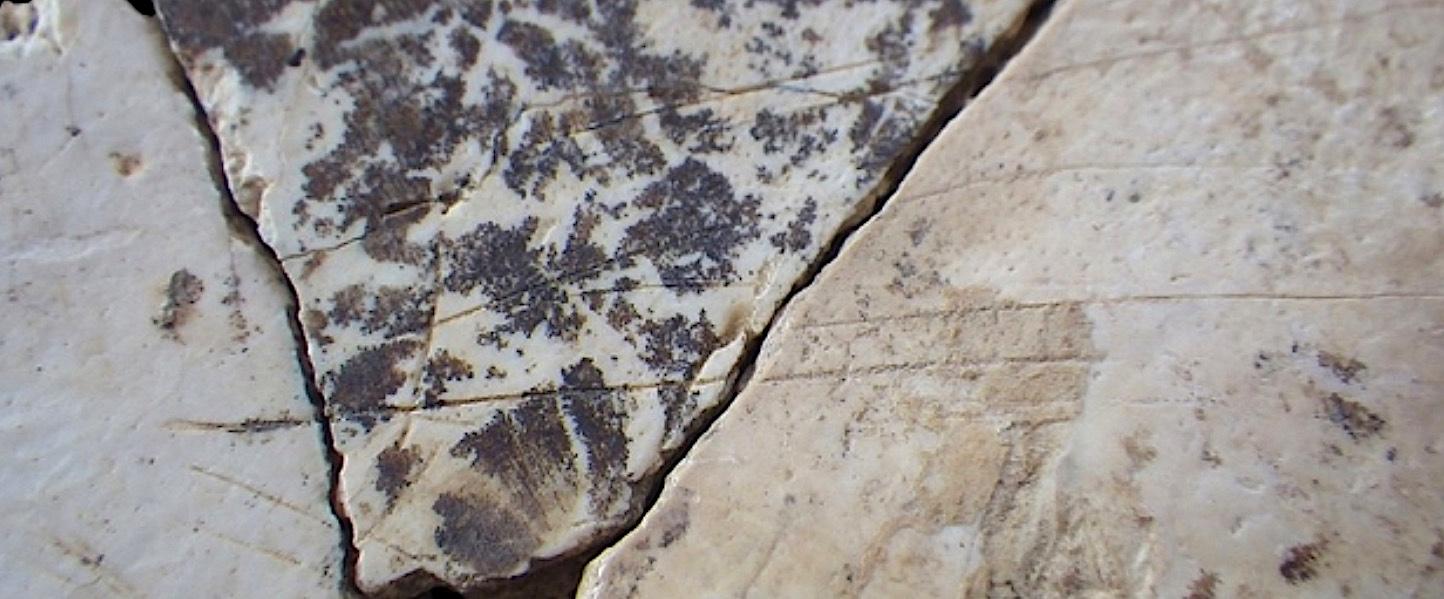 Stries de découpe sur un os pariétal néandertalien. © D.R.