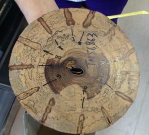 Etude de la régénérescence du bois sur un tronc blessé, MRAC