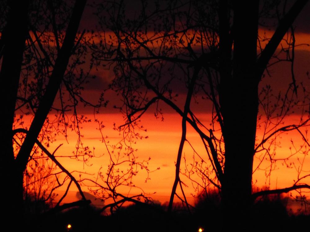 """""""Terre de feu"""" (Cliquer sur la photo pour l'agrandir)"""