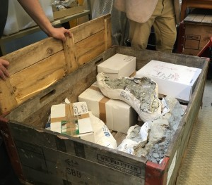 Les fossiles ont été expédiés dans des blocs de plâtre répartis en quatre caisses. (Cliquer pour agrandir)