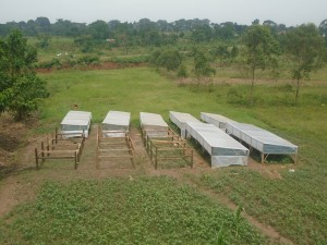 Séchoirs ananas en Ouganda