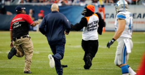 Image result for harambe chicago bears game